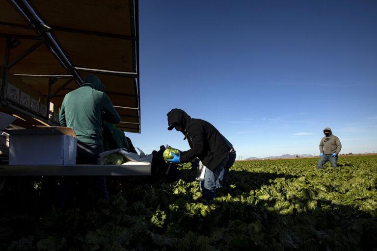 La 'ensaladera' de Arizona se convierte en un semillero del COVID-19