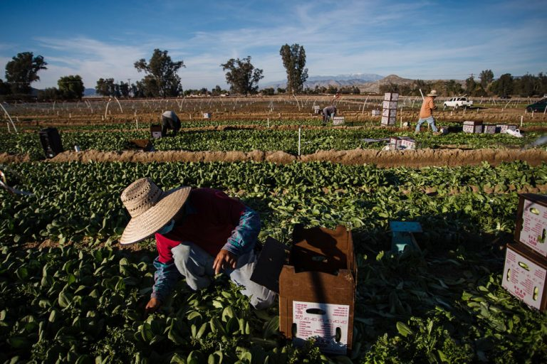 Thousands of farmworkers are prioritized for the coronavirus vaccine