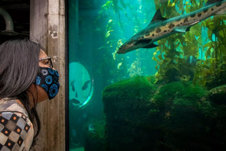 Monterey Bay Aquarium to reopen May 15 after 13-month closure