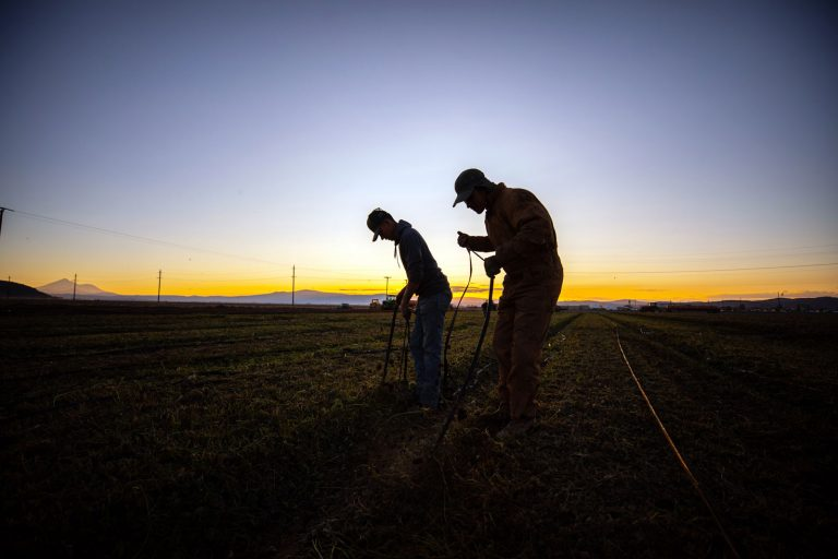 Supreme Court rules against union recruiting on California farms