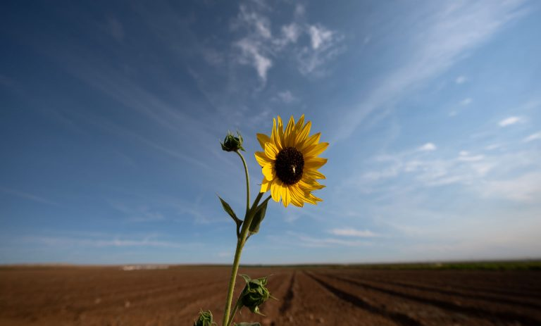 How the drought is affecting California's crops